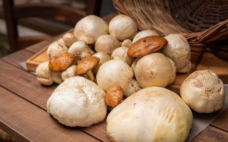 7 Incredible Places for Mushroom Hunting in Greece