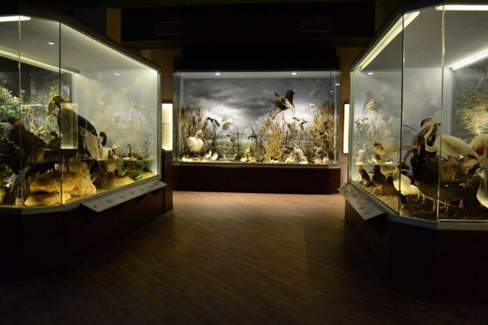 Mushroom & Natural History Museum, Meteora